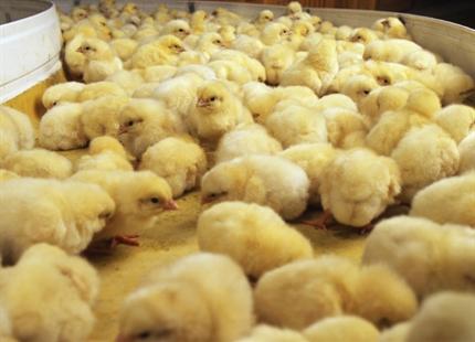 Egg hatchery humidification