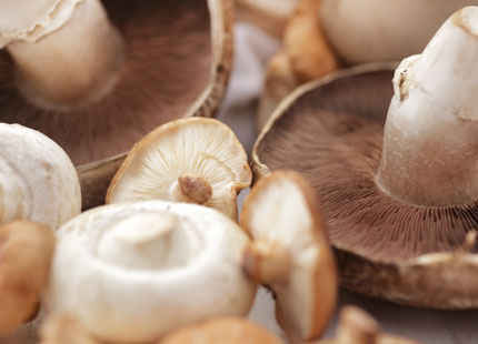 Mushroom Mania: Why Invest in Commercial Humidifiers for Grow Rooms?