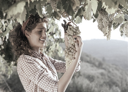 Przechowywania wina