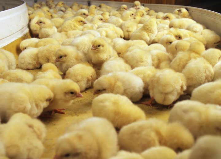 鸡蛋孵化加湿