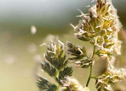 Torr luft kan förvärra symptomen för astma och allergi