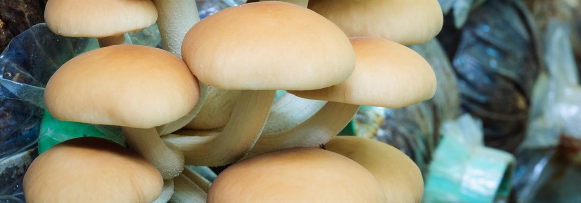 Humidification pour les pépinières de champignons