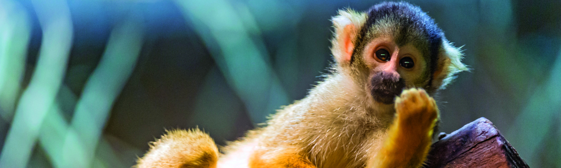 Aporna i Ree Park har ett skönt inomhusklimat