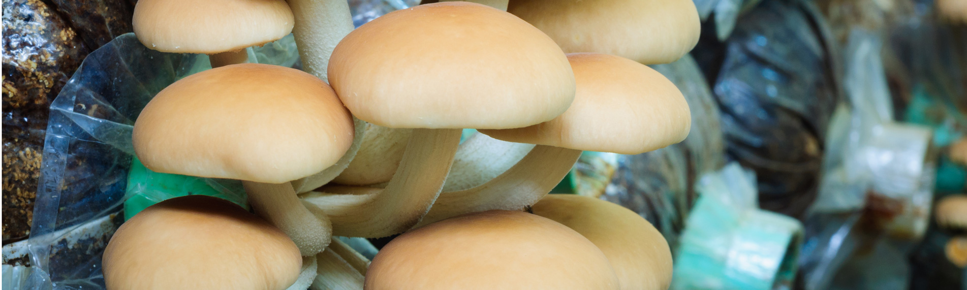 Mushroom growing humidification & humidity control