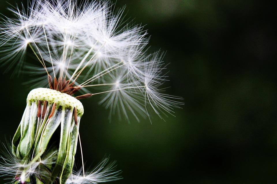 Ren luft är viktigt för astma och allergi - detta kan du med hjälp av luftfuktare uppnå