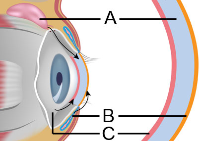 Diagram of humidity and the eye's three layers