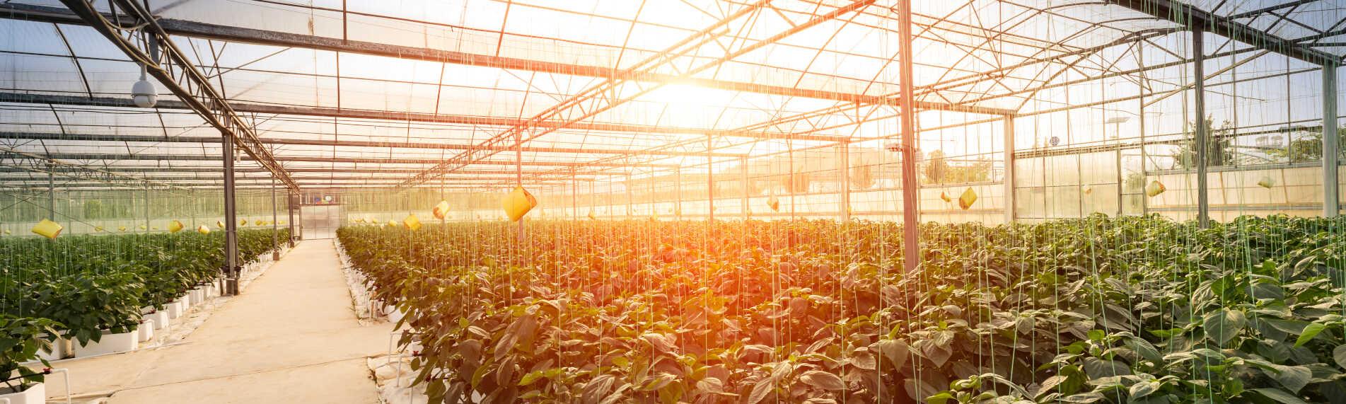Få det optimale plantemiljø med befugtning