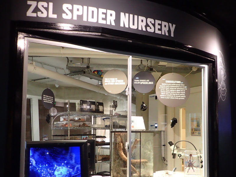 The Spider Nursery at London Zoo.