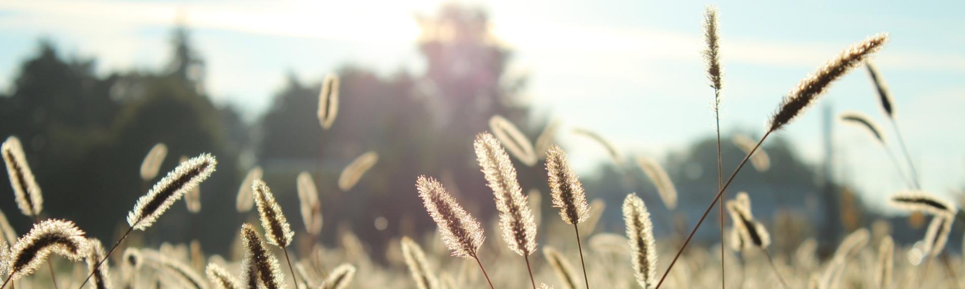 Tør luft kan forværre astma- og allergisymptomer