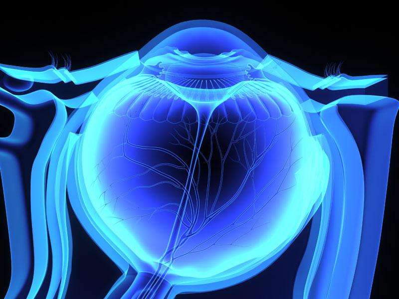 3D rendering of human eye inside orbital cavity